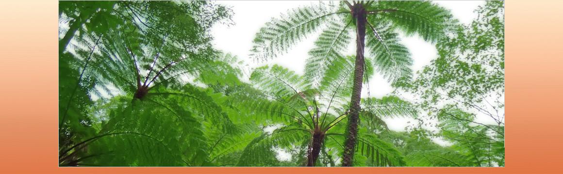 豊かな自然環境と島の人々の心